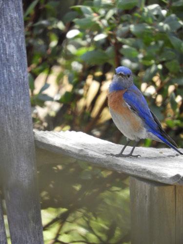Bluebird-on-chair