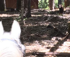 Horse and Bear standoff